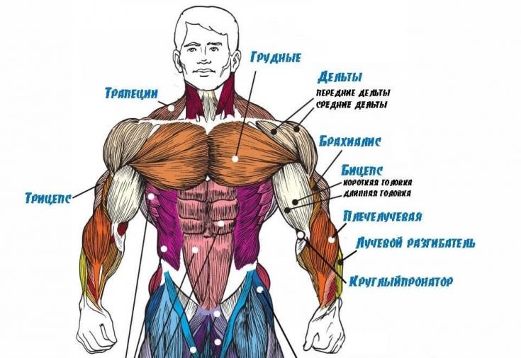 как восстановить мышцы рук