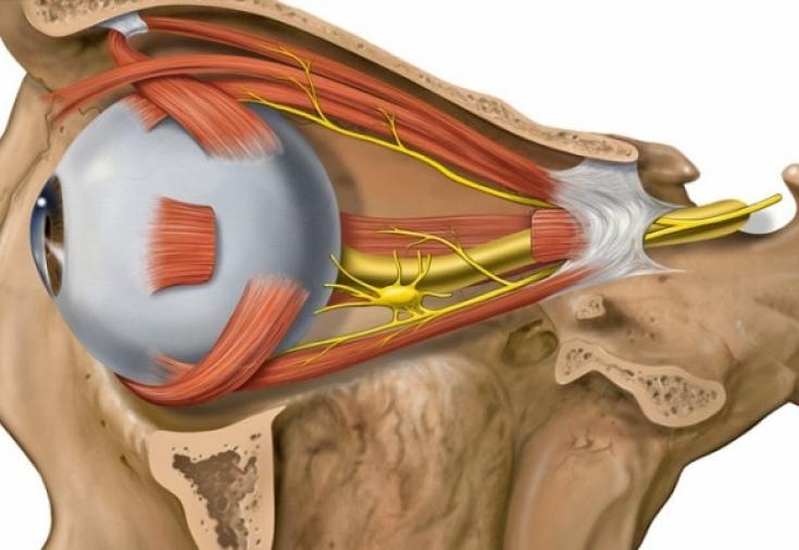 Атрофия зрительного нерва: причины, симптомы и лечение - Estet-Portal