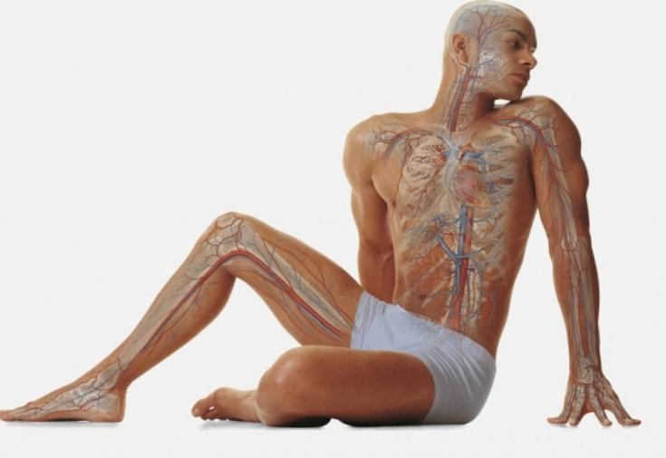 Человеческий организм: 5 странных и удивительных фактов
