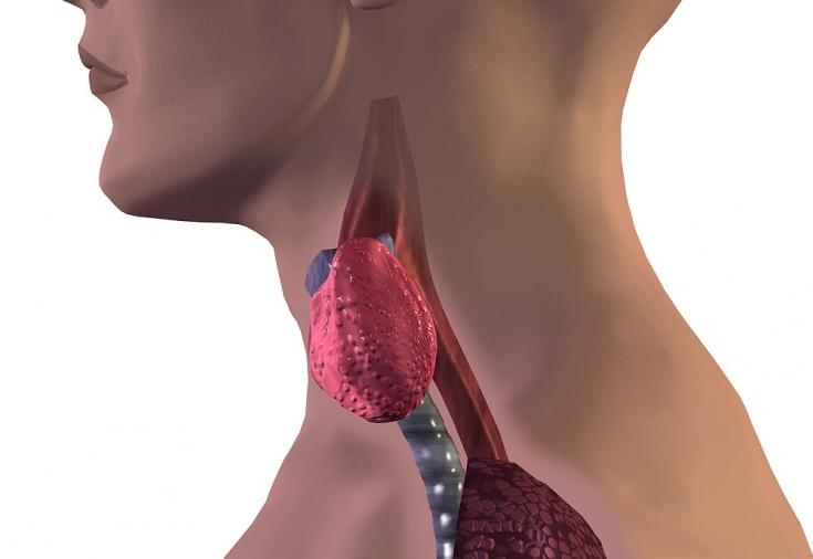 Что нужно знать о синдроме гипотиреоза? Часть 2