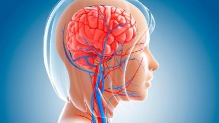 Как улучшить мозговое кровообращение без лекарств