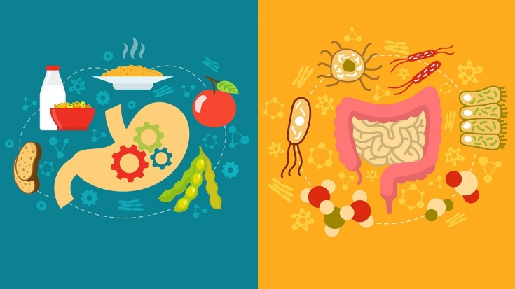 Восстановление микрофлоры кишечника народными средствами