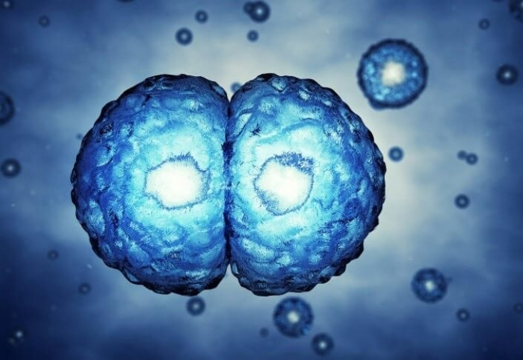 myths embryonic stem cell research