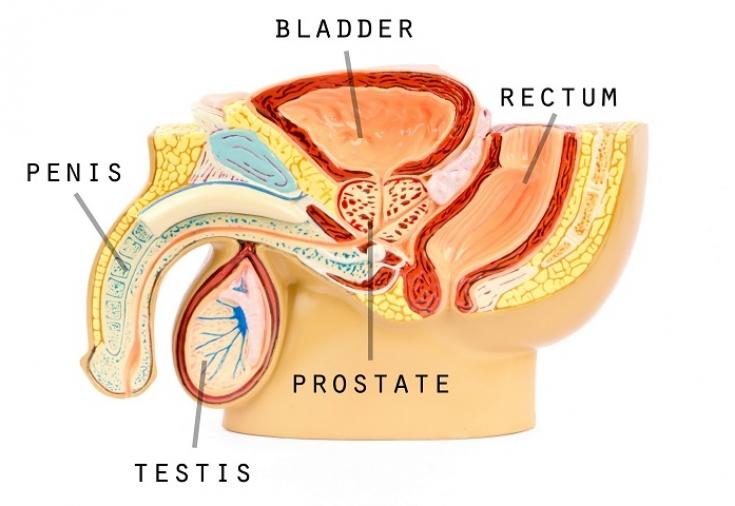 Здоровье молочница у мужчин