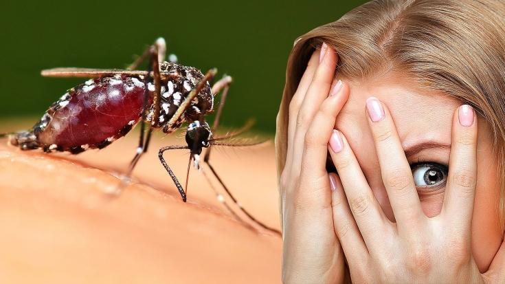 Натуральный спрей от комаров: 3 действенных рецепта