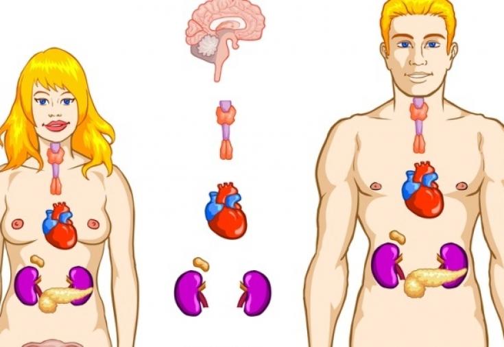 Вырабатывается ли адреналин при сексе