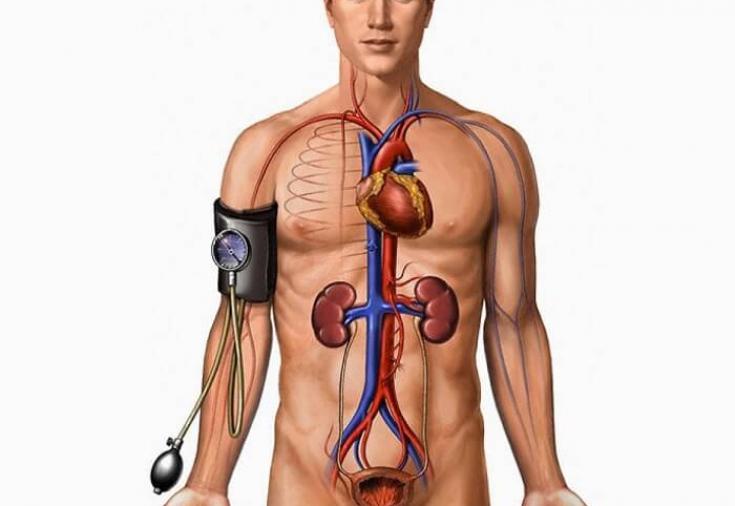 Почечная гипертензия механизм развития и лечение
