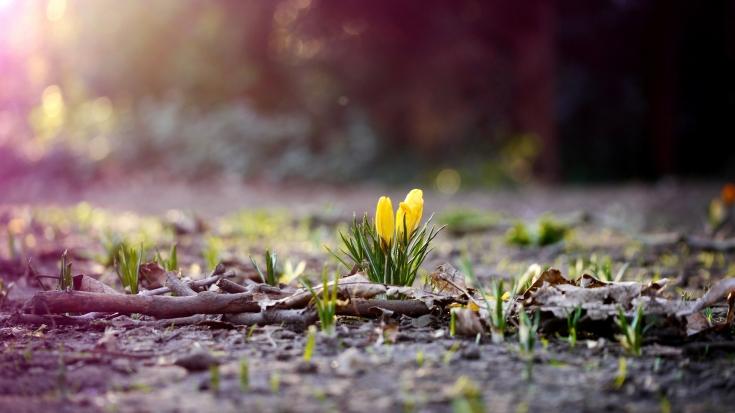 Полезные травы весны для здоровья