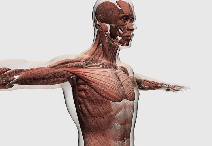 Защита суставов от дополнительного напряжения хрустят суставы плечи бодибилдинг