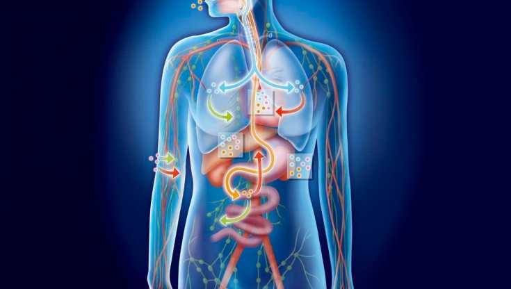 Слушай свое тело, чтобы узнать что нужно организму