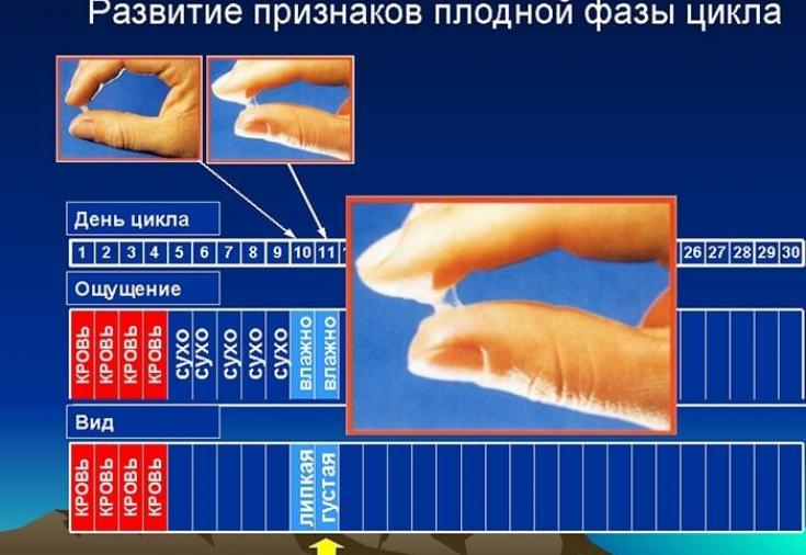 Базальная температура, метод цервикальной слизи