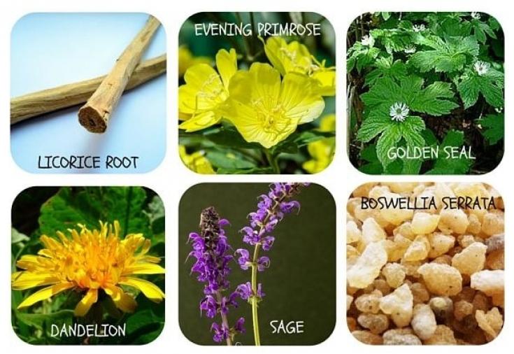 Травы и настои для лечения экземы - Estet-Portal