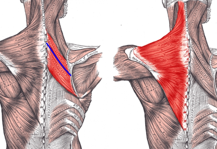 Ромбовидная мышца упражнения
