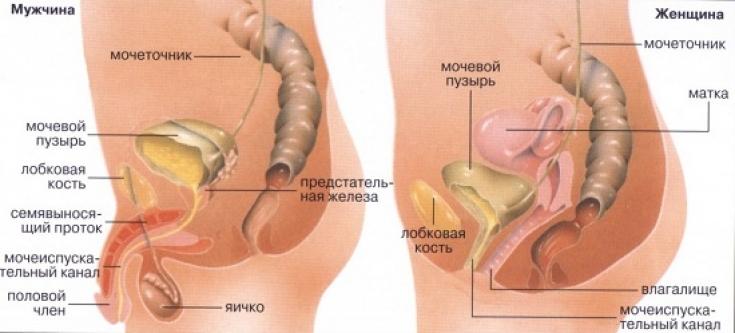 Боли в канале пениса