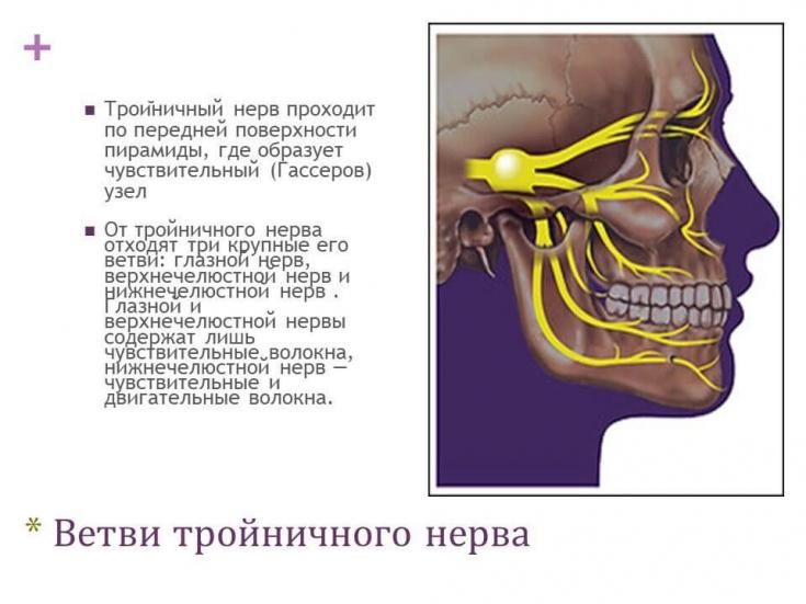 как проходит тройничный нерв фото слову, поставки турцию