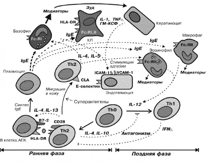 Облысение при атопическом дерматите thumbnail