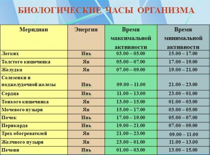 Биоритмы органов человека по часам