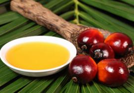 Чем вредно пальмовое масло: проверенные факты