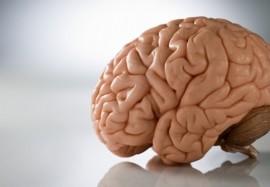 Что скрывает работа человеческого мозга: знакомимся с интересными фактами