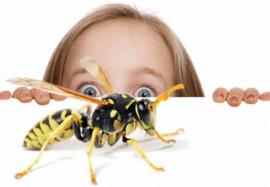 Фобия насекомых – просто страх или болезнь