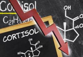 Гормон стресса: почему важно контролировать уровень кортизола