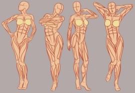 Интересные факты о мышцах, которые поражают своей силой