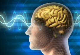 Как работает мозг человека: 5 мифов, которые опровергла наука