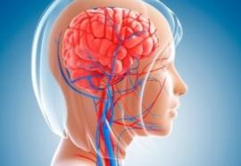 Как улучшить кровообращение мозга: самые эффективные методы