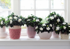 Какие цветы держать дома: благоприятные и неблагоприятные растения
