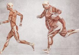 Лептин: как активировать «гормон насыщения»