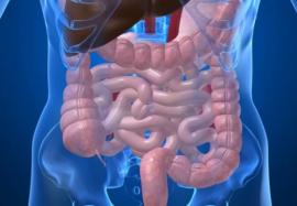 Микробиота кишечника может способствовать развитию диабета 2 типа