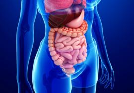 Мотилин: гормон-активатор моторики кишечника
