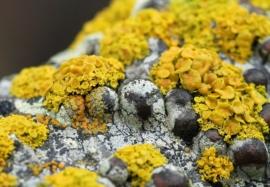 Неизвестные факты о плесени — многоликие грибы
