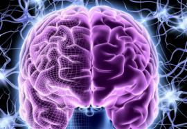 Нейропластичность мозга: 5 способов развить свой интеллект