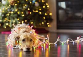 Почему нет праздничного настроения и как его получить: опасности «новогодней депрессии»