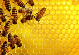 Польза натурального меда: почему нужно есть пчелиный продукт