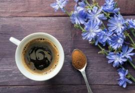 Свойства цикория: альтернатива кофе или вредный напиток