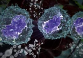 Танго двух: совместная работа иммунных и стволовых клеток в коже и фолликуле